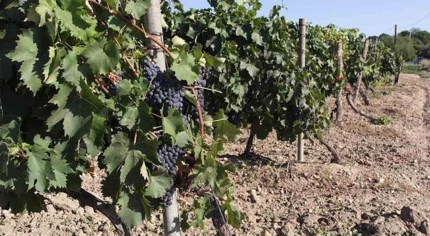Vino e i prodotti della terra in Corsica